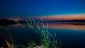 Sidor av en säv på ett stort, tyst och fridsamt sommarbygddamm efter solnedgång Royaltyfri Bild