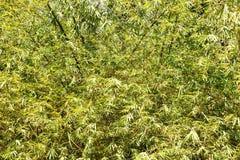 Sidor av en tropisk växt abstrakt bakgrund Fotografering för Bildbyråer