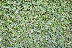 Sidor av en tropisk växt abstrakt bakgrund Royaltyfri Foto