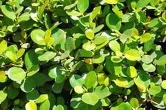 Sidor av en tropisk växt abstrakt bakgrund Arkivfoton