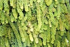 Sidor av en tropisk växt abstrakt bakgrund Arkivbilder