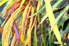 Sidor av en tropisk växt abstrakt bakgrund Royaltyfria Foton
