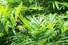 Sidor av en tropisk växt abstrakt bakgrund Royaltyfri Bild