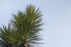 Sidor av palmträdet i himlen royaltyfria foton