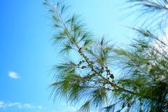 Sidor av sörjer träd och himmel Arkivbilder