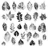 Sidor av svarta konturer av träd och buskar Royaltyfri Foto
