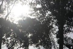 Sidor av träd mot den glimma solen royaltyfri foto