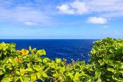 Sidor av träd och havet Royaltyfria Foton