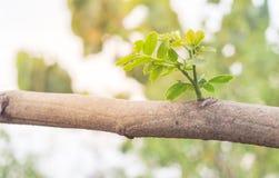 Sidor av trädet i vårsäsong, abstrakt blad Royaltyfria Foton