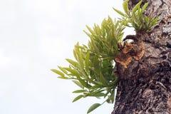 Sidor av trädet i vårsäsong, abstrakt blad Arkivfoto