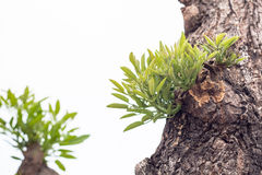 Sidor av trädet i vårsäsong, abstrakt blad Royaltyfri Fotografi