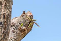 Sidor av trädet i vårsäsong, abstrakt blad Royaltyfri Foto
