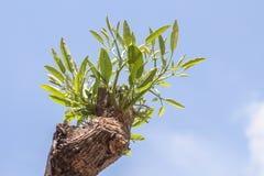 Sidor av trädet i vårsäsong, abstrakt blad Royaltyfria Bilder