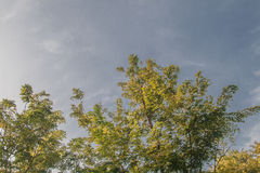 Sidor av trädet med blå himmel Arkivfoto