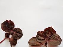 sidor av växter i purpurfärgat och rött med vit bakgrund arkivbild