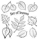 Sidor av växtPictogramuppsättningen Royaltyfria Bilder