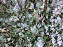 Sidor bakgrund låter vara naturserie hösten colors seamless textur för leavesmodell Bladtexturbakgrund leaf Royaltyfri Foto