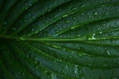 Sidor efter regnet Fotografering för Bildbyråer