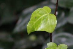 Sidor för en gräsplan i den bruna pinnen Royaltyfri Fotografi