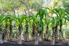 Sidor för gröna Plants/ arkivfoto