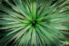 Sidor för gröna Plants/ arkivbilder