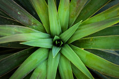 Sidor för gröna Plants/ royaltyfri fotografi