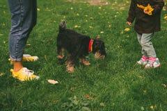 Sidor för liten flickasammankomstguling på grönt gräs med den vuxna unga kvinnan och den lilla hunden royaltyfri bild