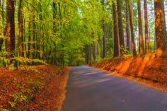 Sidor för träd för skog för vägdjuphöst färgrika royaltyfri foto