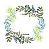 Sidor för Watercolo gräsplanakacia Blom- lövverk för bladväxtbotanisk trädgård Fyrkant för ramgränsprydnad stock illustrationer