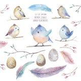 Sidor för witm för fågel för tecknad film för flyg för handteckningsvattenfärg, branche royaltyfri illustrationer