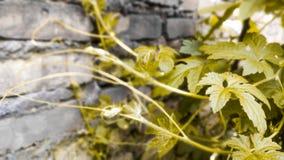 Sidor fortplantar Arkivfoton