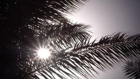 Sidor från en palmträd som svänger i vinden som ett ljust ljus från solen skiner close upp arkivfilmer