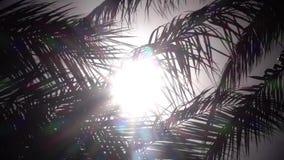 Sidor från en palmträd som svänger i vinden som ett ljust ljus från solen skiner close upp långsam rörelse stock video