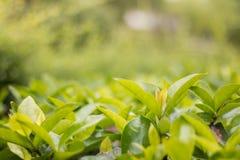 Sidor gör grön nära övre för bakgrund Arkivfoto