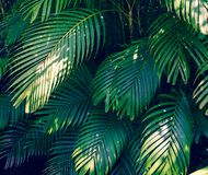Sidor gör sammandrag för att gömma i handflatan den färgrika blomman för tropiska sidor på mörkt tropiskt mörker för lövverknatur arkivbild