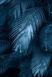 Sidor g?r sammandrag f?r att g?mma i handflatan den f?rgrika blomman f?r tropiska sidor p? m?rkt tropiskt m?rker f?r l?vverknatur fotografering för bildbyråer