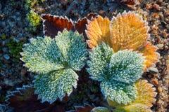 Sidor i rimfrost Arkivfoton