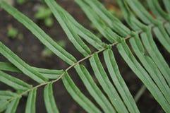 Sidor i trädgården, ny gräsplan lämnar bakgrund i det trädgårds- solljuset Textur av gröna sidor, ormbunkeblad i Forest Garden a Royaltyfri Fotografi