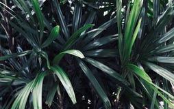 Sidor i trädgården, ny gräsplan lämnar bakgrund i det trädgårds- solljuset Textur av gröna sidor, ormbunkeblad i Forest Garden a Royaltyfria Bilder
