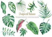 Sidor och blommor för vattenfärg tropiska stock illustrationer