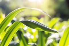 Sidor planterar med friskhet fotografering för bildbyråer