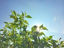 Sidor reflekterar solljus Royaltyfria Bilder