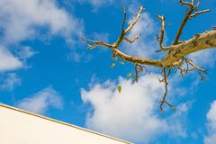 Sidor som faller från ett beskurit fruktträd i solljus royaltyfria bilder
