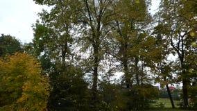 Sidor som faller från trädet stock video