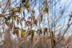 Sidor som täckas i frost i vinter Arkivfoto