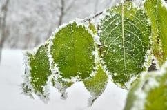 Sidor som täckas med frost i vinterträna fotografering för bildbyråer