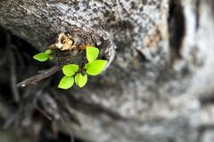 Sidor växer från ett torrt träd och att symbolisera ansträngningen royaltyfri fotografi