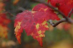 Sidorna av hösten royaltyfria bilder
