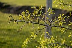 Sidorna av träden Arkivbilder