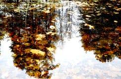 Sidorna i vattnet Royaltyfri Bild